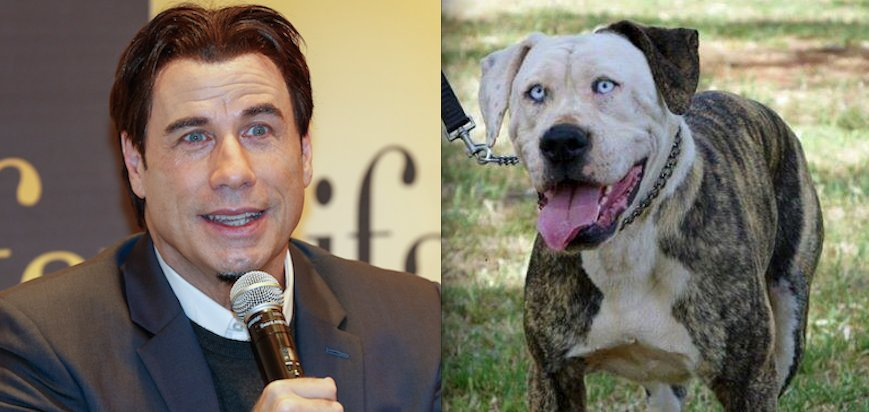 Photo of Dog Travolta, John Travolta In Dog Form, Can Make 'Pup Fiction' A Reality (PHOTOS)