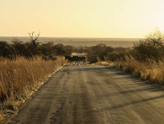 Photo of The Life Lessons I Learned From My First Safari