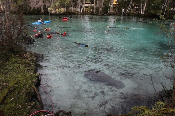 Photo of Yeehaw! See the Sea Cow Roundup in Florida's Citrus County
