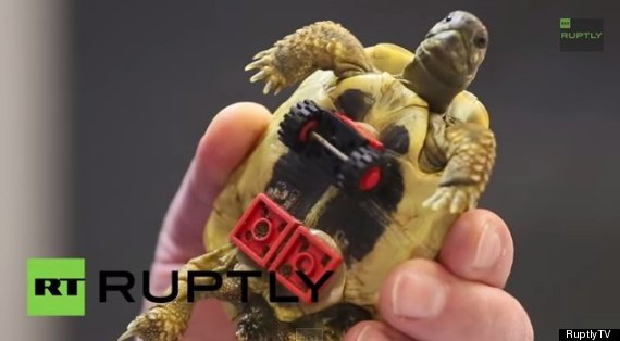 Photo of Tortoise Gets Wheelchair Made From Legos, Skates Around Like A Pro