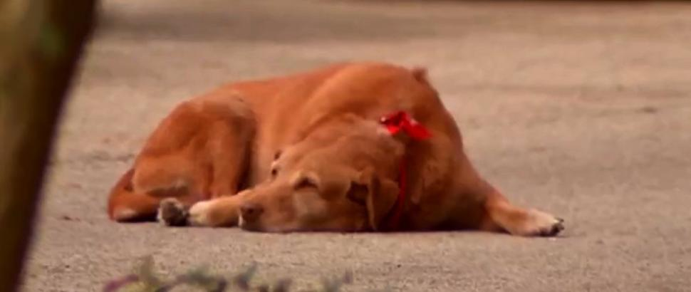 Photo of Dog Lies Down For Hours on Spot Where Owner Was Killed
