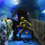 Cirque Du Soleil to bring OVO to Orlando