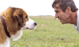 'A Dog's Purpose' Debuts At No. 2 At Box Office Despite Controversy
